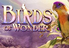 Birds of Wonder Slots Online