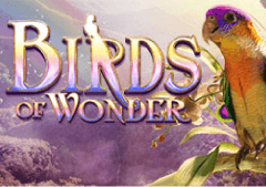 Birds of Wonder Slots Online Logo